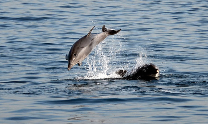 Dolphins return to Istanbul coast when abandoned due to COVID-19 ...